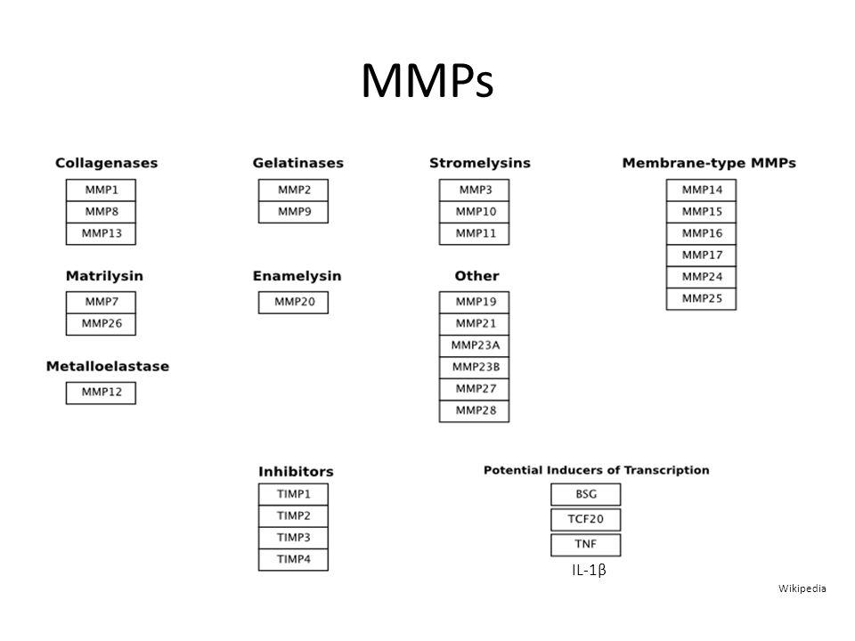 MMPs Wikipedia IL-1β