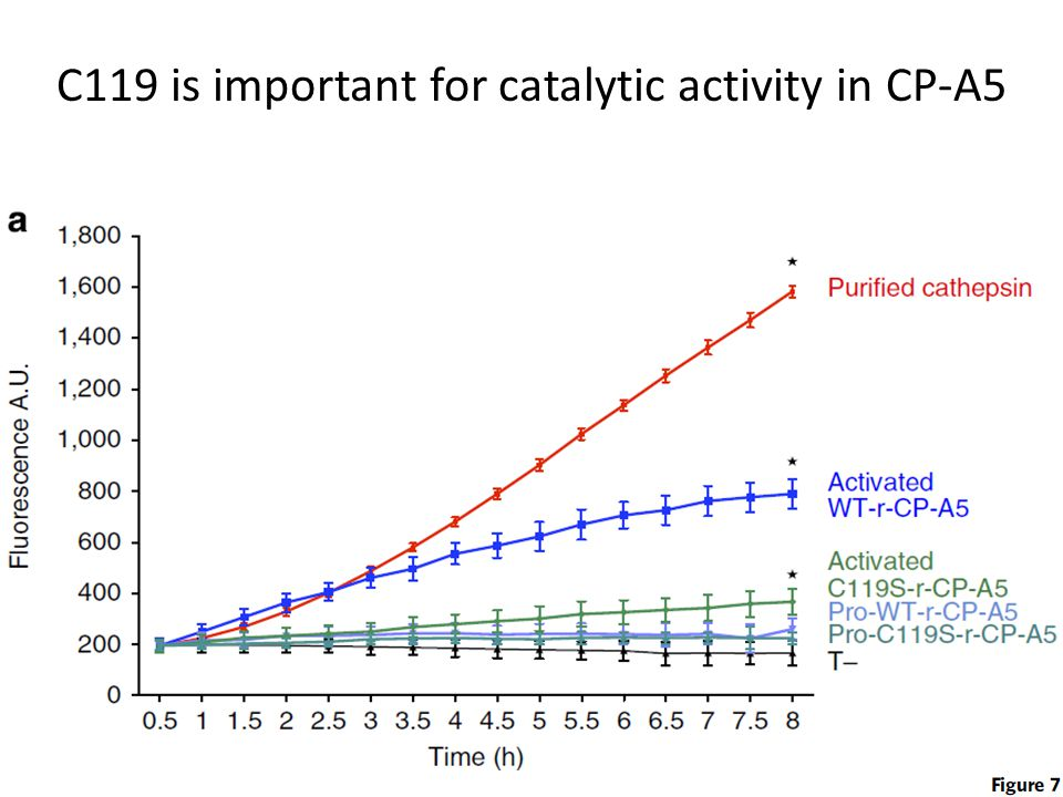 C119 is important for catalytic activity in CP-A5