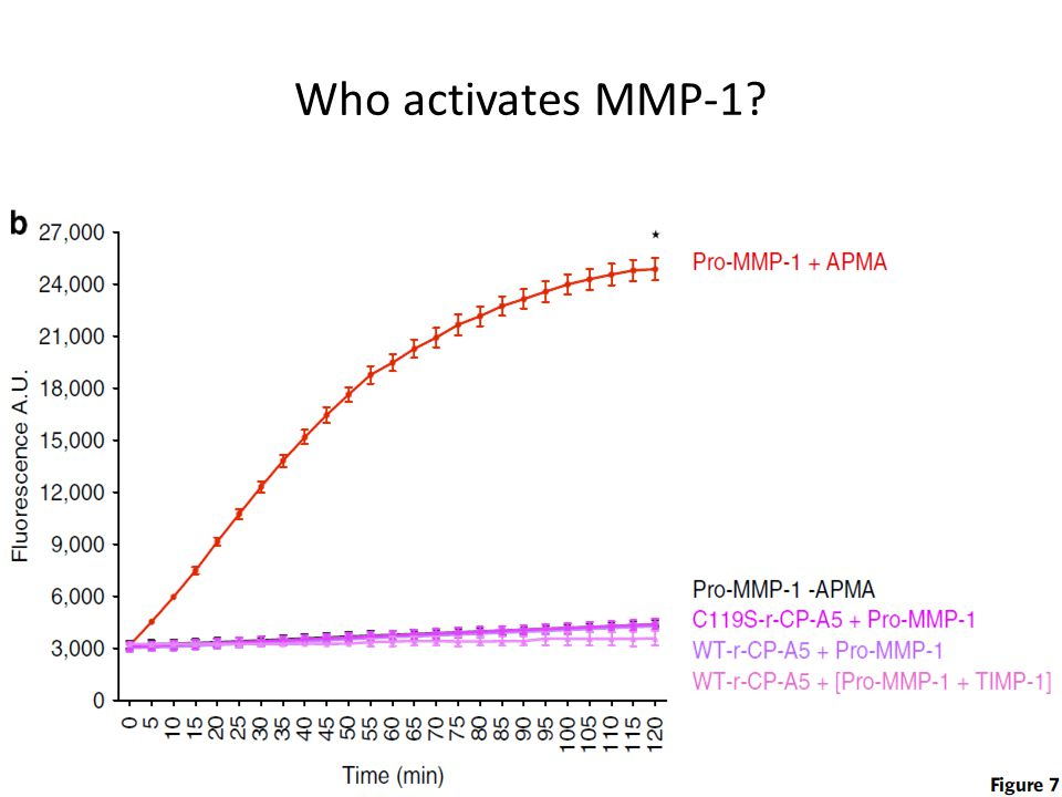 Who activates MMP-1