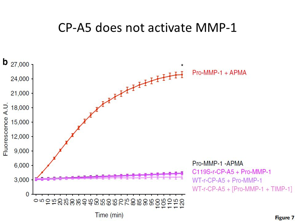 CP-A5 does not activate MMP-1