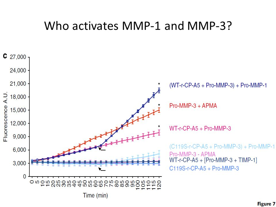 Who activates MMP-1 and MMP-3