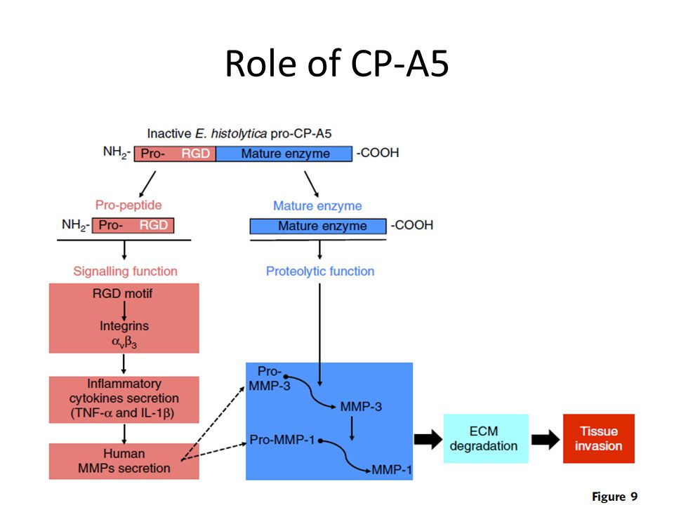Role of CP-A5