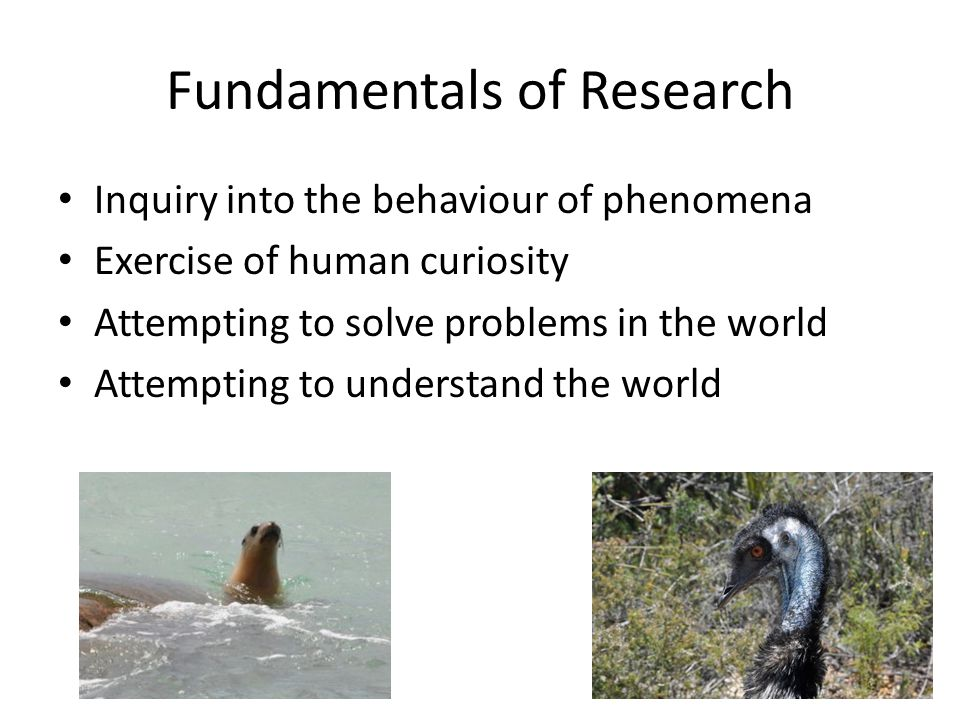 Fundamentals of Research Inquiry into the behaviour of phenomena Exercise of human curiosity Attempting to solve problems in the world Attempting to understand the world