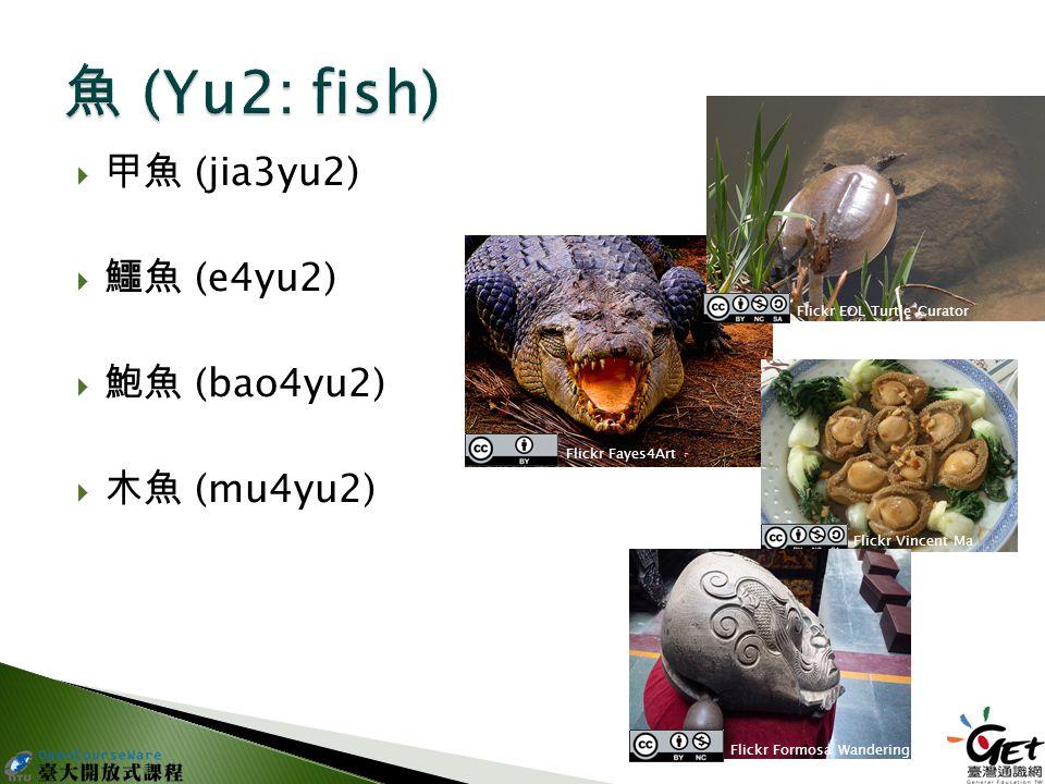  甲魚 (jia3yu2)  鱷魚 (e4yu2)  鮑魚 (bao4yu2)  木魚 (mu4yu2) Flickr Fayes4Art Flickr EOL Turtle Curator Flickr Vincent Ma Flickr Formosa Wandering