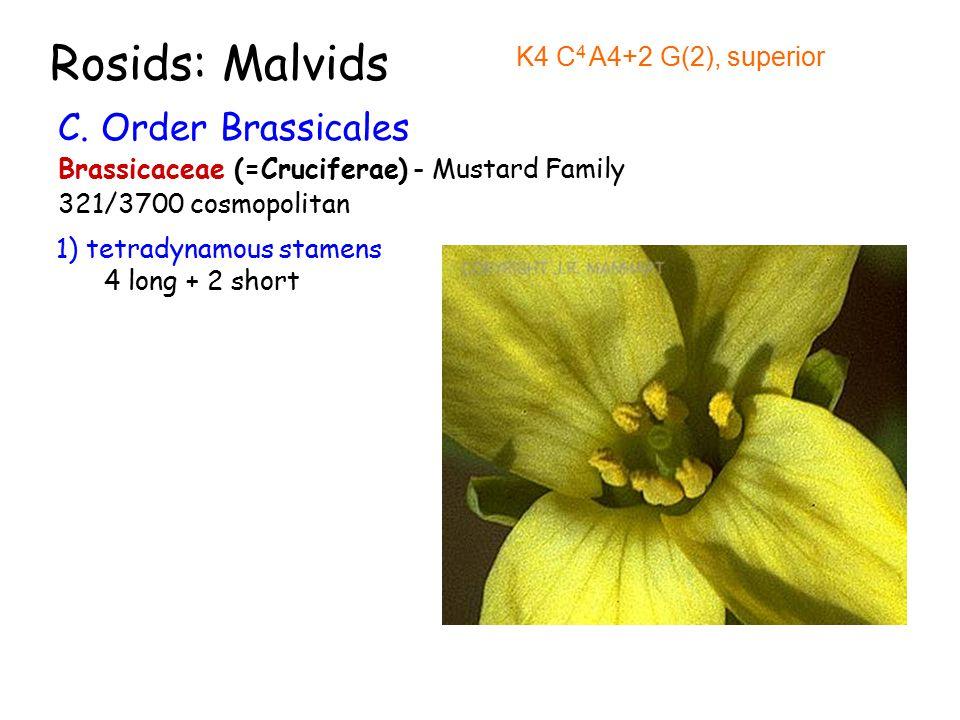 Rosids: Malvids C.