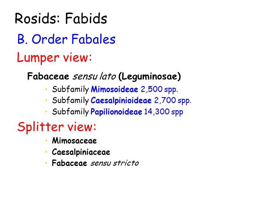 B. Order Fabales Lumper view: Fabaceae sensu lato (Leguminosae) Subfamily Mimosoideae 2,500 spp.