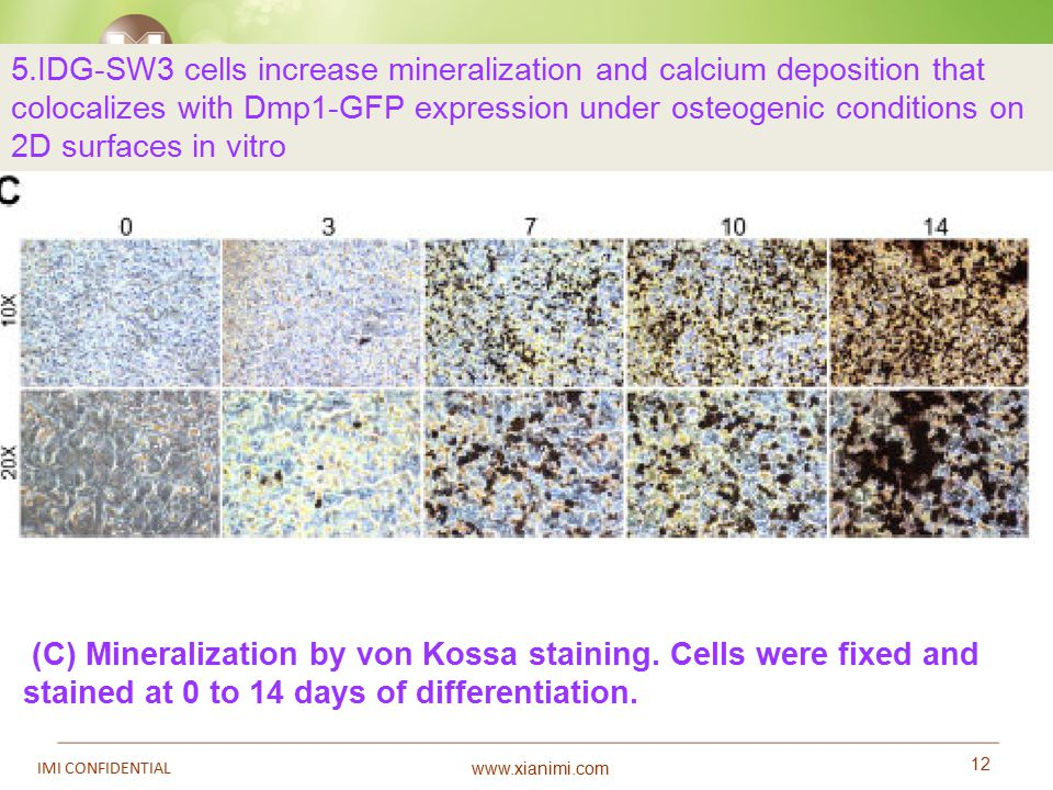 www.xianimi.com 12 IMI CONFIDENTIAL (C) Mineralization by von Kossa staining. Cells were fixed and stained at 0 to 14 days of differentiation. 5.IDG-S