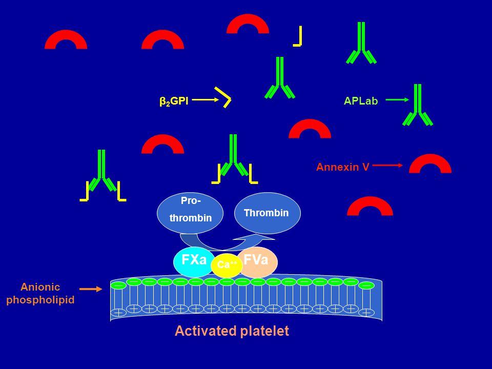 β 2 GPI Annexin V APLab Anionic phospholipid Activated platelet Pro- thrombin Thrombin FXa FVa Ca ++