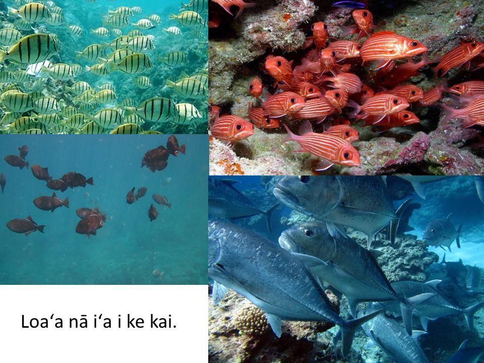 Loaʻa iā kākou i nā iʻa!