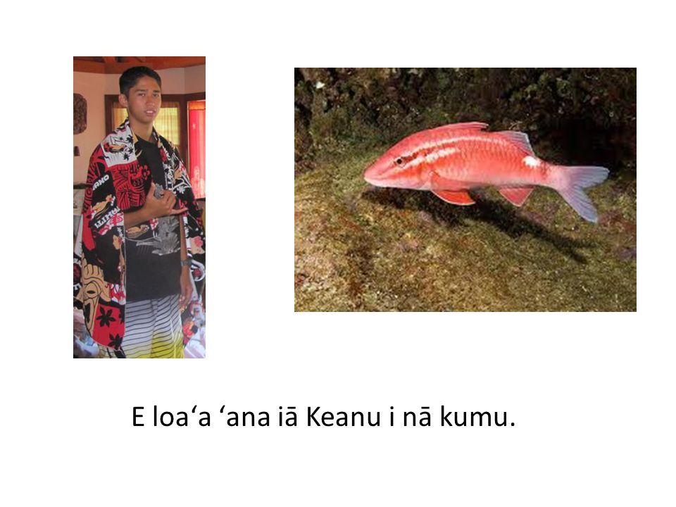 E loaʻa ʻana iā Kaulana i nā kole.