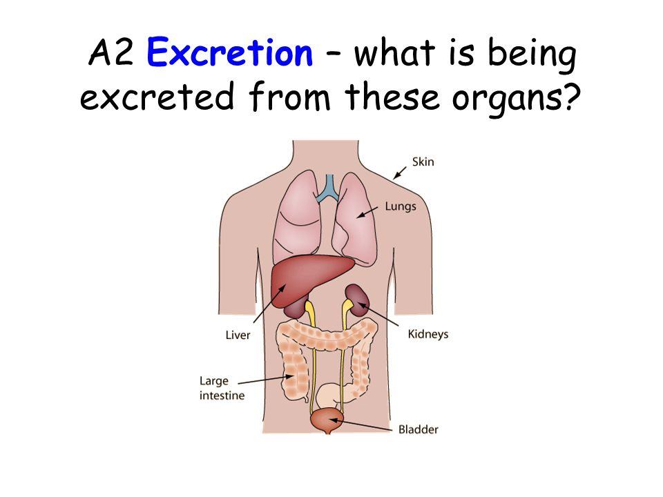 AIMS Define the term excretion. Explain the importance of removing metabolic wastes from the body, including carbon dioxide and nitrogenous waste. Des