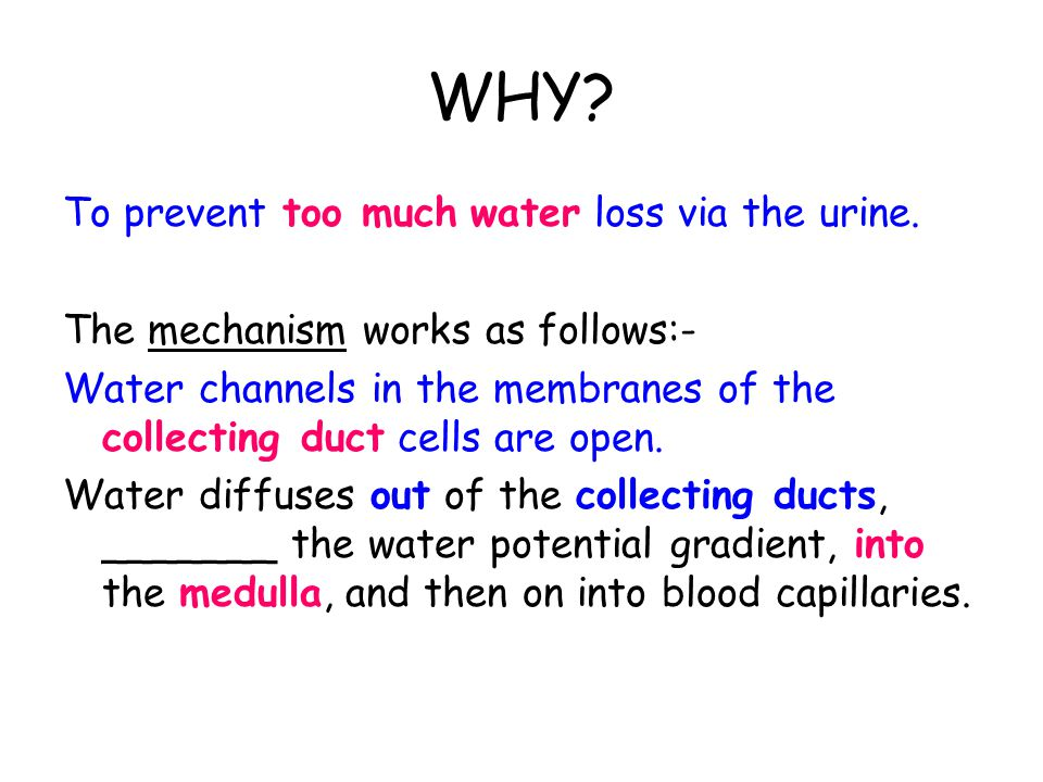 HOW? By actively transporting chloride and sodium ions, out of the ascending limb into the tissue fluid of the medulla. These ions ________ the water