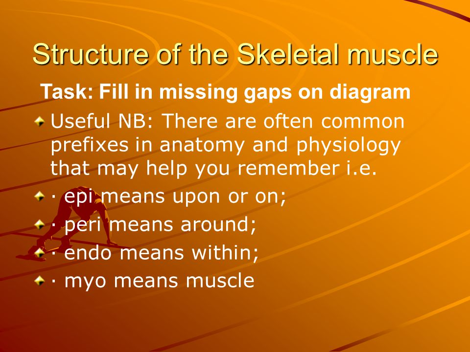 Structure of the Skeletal muscle Task: Fill in missing gaps on diagram Useful NB: There are often common prefixes in anatomy and physiology that may help you remember i.e.