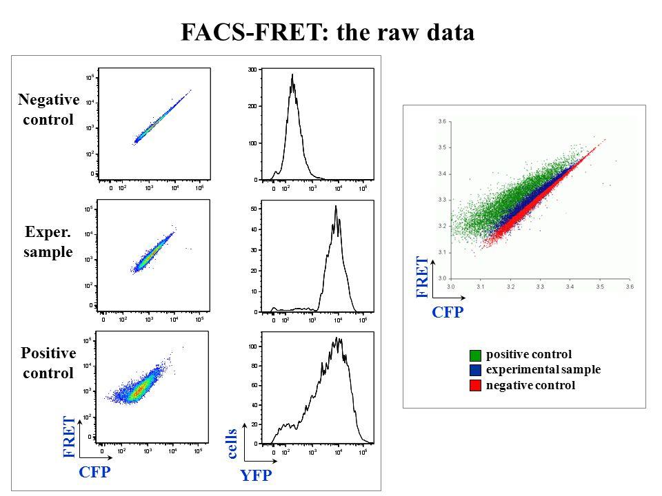 Negative control Exper. sample Positive control FRET CFP cells YFP FACS-FRET: the raw data FRET CFP positive control experimental sample negative cont