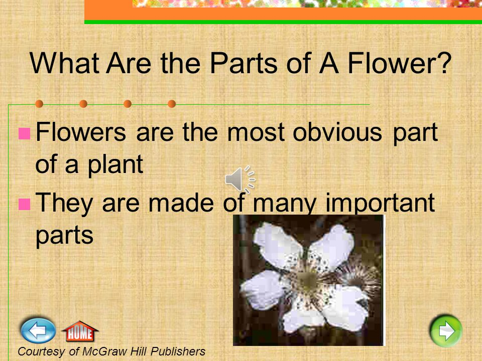 Most flowers contain male and female parts.