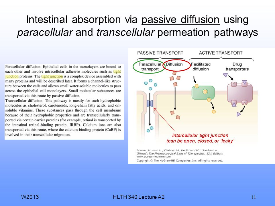 HLTH 340 Lecture A2W2013 10 Types of membrane transport mechanisms: active transport and passive transport internal dose (blood) external dose (site o