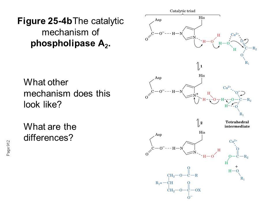 Figure 25-4bThe catalytic mechanism of phospholipase A 2.