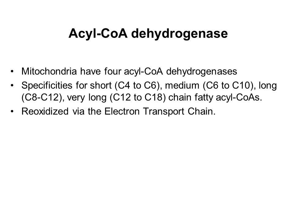 Acyl-CoA dehydrogenase Mitochondria have four acyl-CoA dehydrogenases Specificities for short (C4 to C6), medium (C6 to C10), long (C8-C12), very long (C12 to C18) chain fatty acyl-CoAs.
