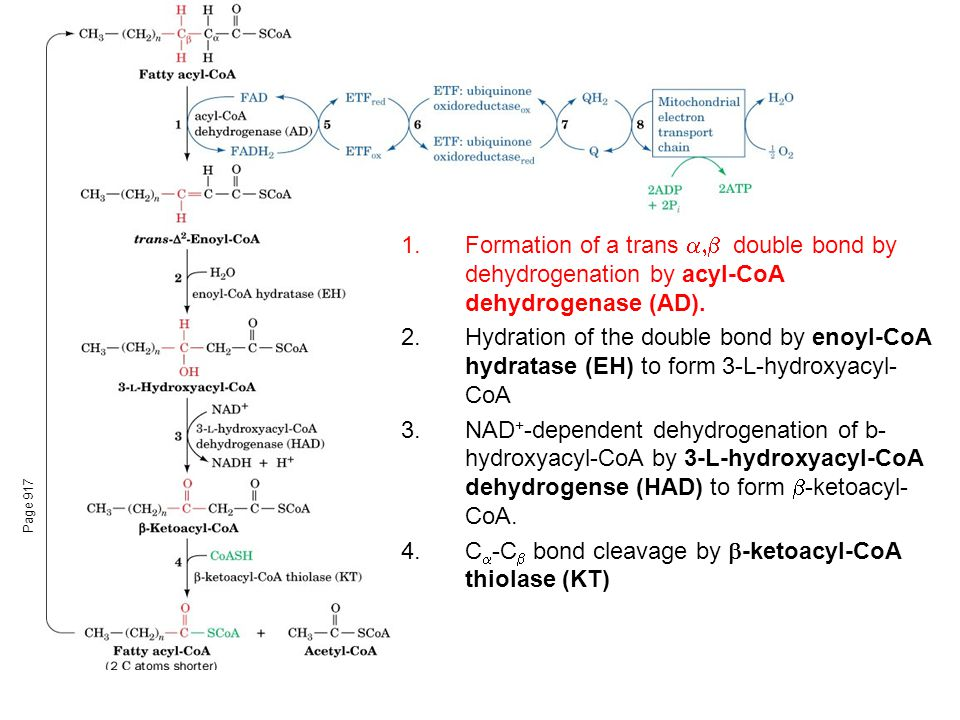 Page 917 1.Formation of a trans  double bond by dehydrogenation by acyl-CoA dehydrogenase (AD).