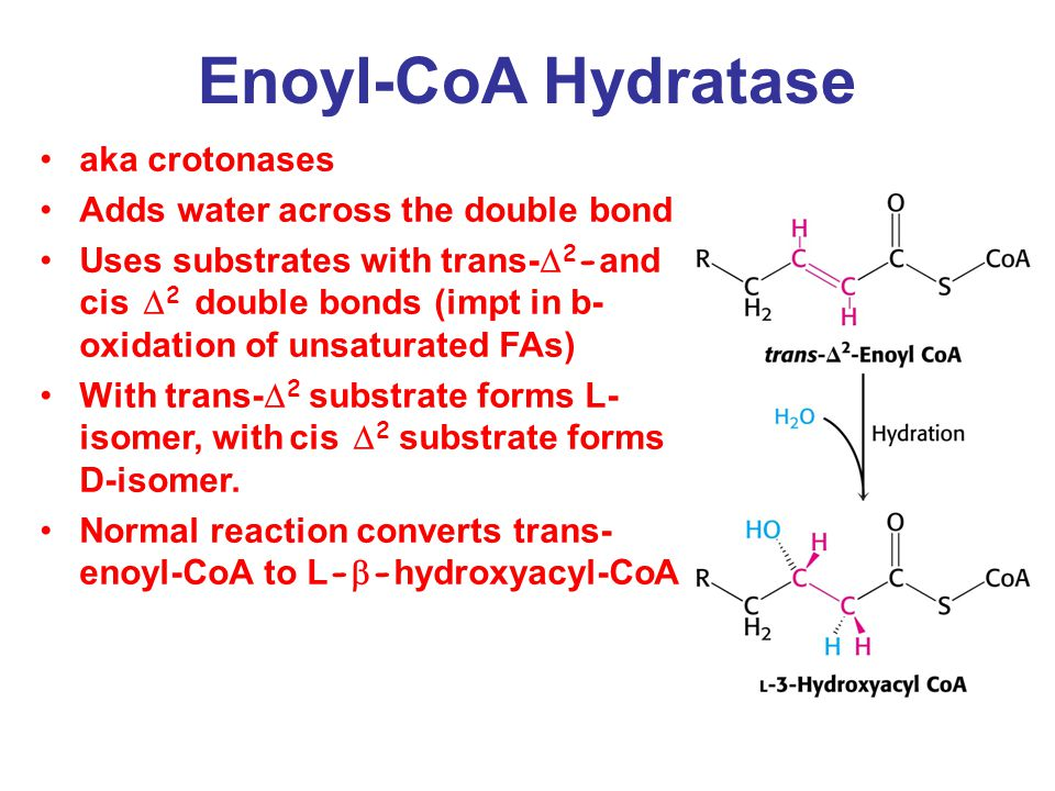 Enoyl-CoA Hydratase aka crotonases Adds water across the double bond Uses substrates with trans-  2 - and cis  2 double bonds (impt in b- oxidation of unsaturated FAs) With trans-  2 substrate forms L- isomer, with cis  2 substrate forms D-isomer.