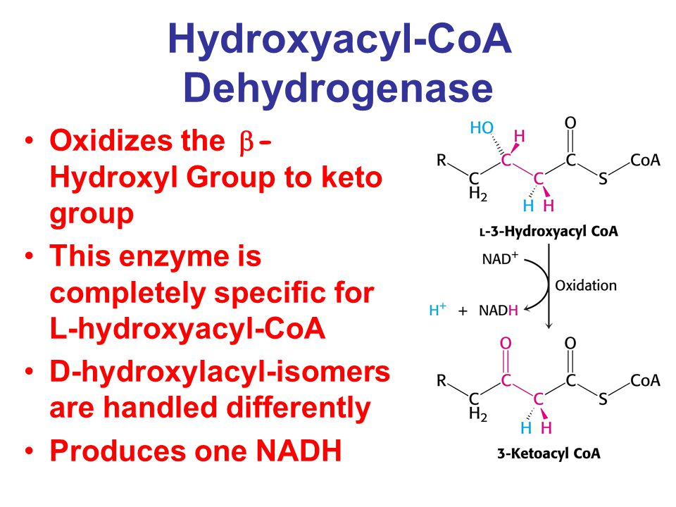 Hydroxyacyl-CoA Dehydrogenase Oxidizes the  - Hydroxyl Group to keto group This enzyme is completely specific for L-hydroxyacyl-CoA D-hydroxylacyl-isomers are handled differently Produces one NADH