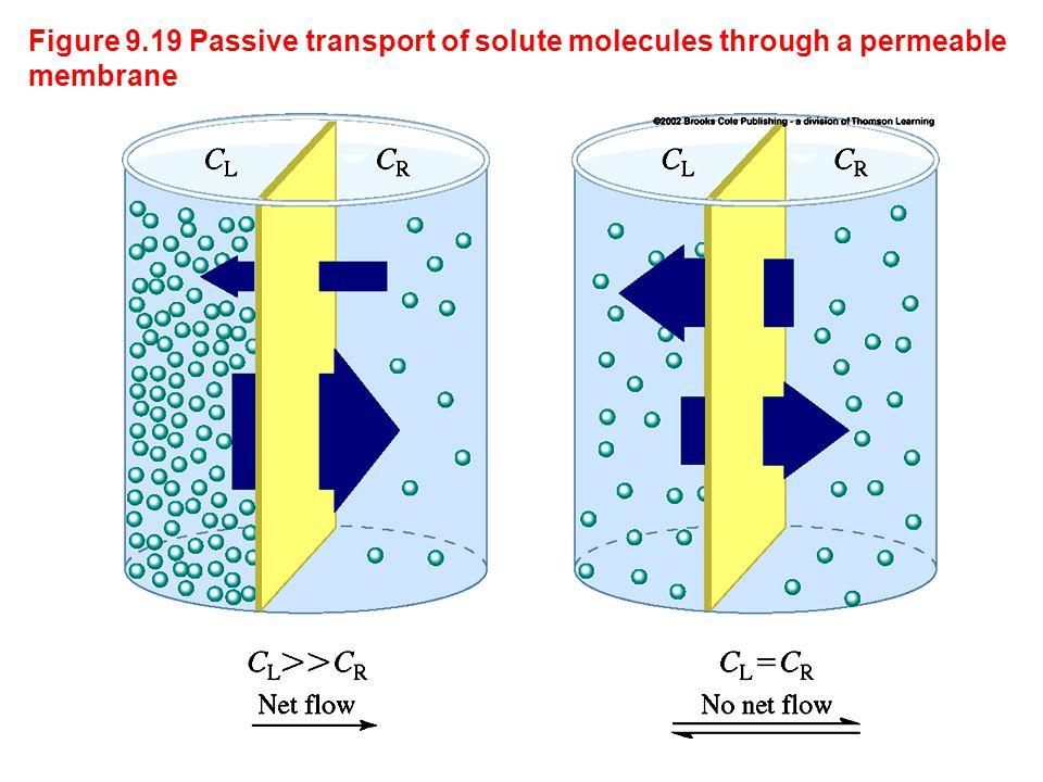 Figure 9.19 Passive transport of solute molecules through a permeable membrane