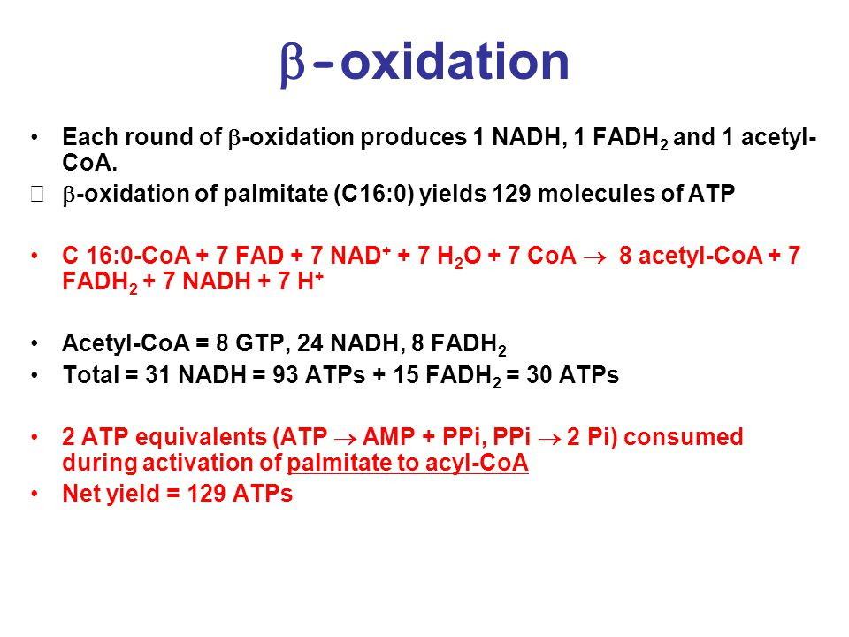  - oxidation Each round of  -oxidation produces 1 NADH, 1 FADH 2 and 1 acetyl- CoA.
