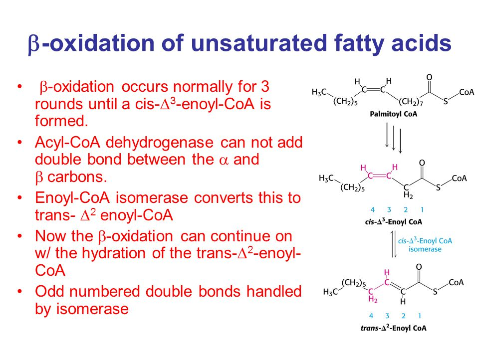  -oxidation of unsaturated fatty acids  -oxidation occurs normally for 3 rounds until a cis-  3 -enoyl-CoA is formed.