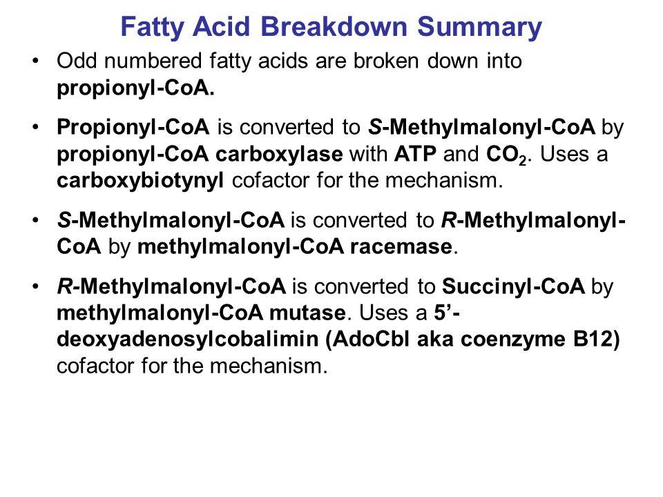 Fatty Acid Breakdown Summary Odd numbered fatty acids are broken down into propionyl-CoA.