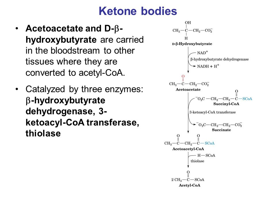 Ketone bodies Acetoacetate and D-  - hydroxybutyrate are carried in the bloodstream to other tissues where they are converted to acetyl-CoA.