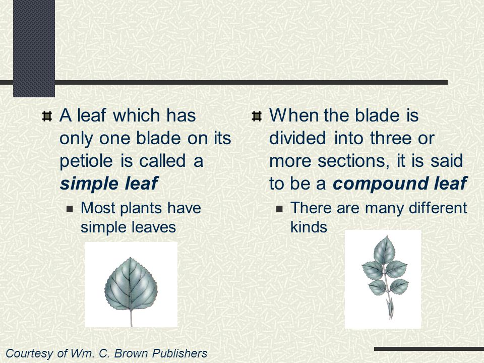 What Are Some of the Major Types of Leaves.