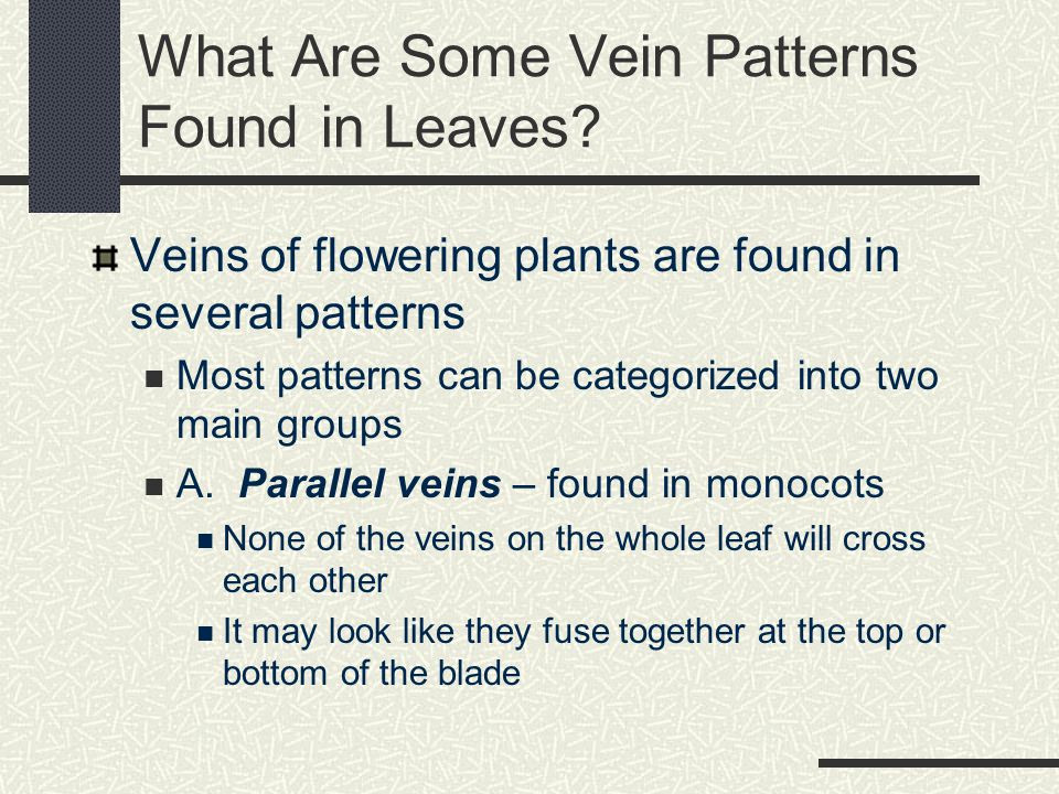 Types of Compound Leaves Odd Pinnately Compound Even Pinnately Compound Palmately Compound Courtesy of Wm.