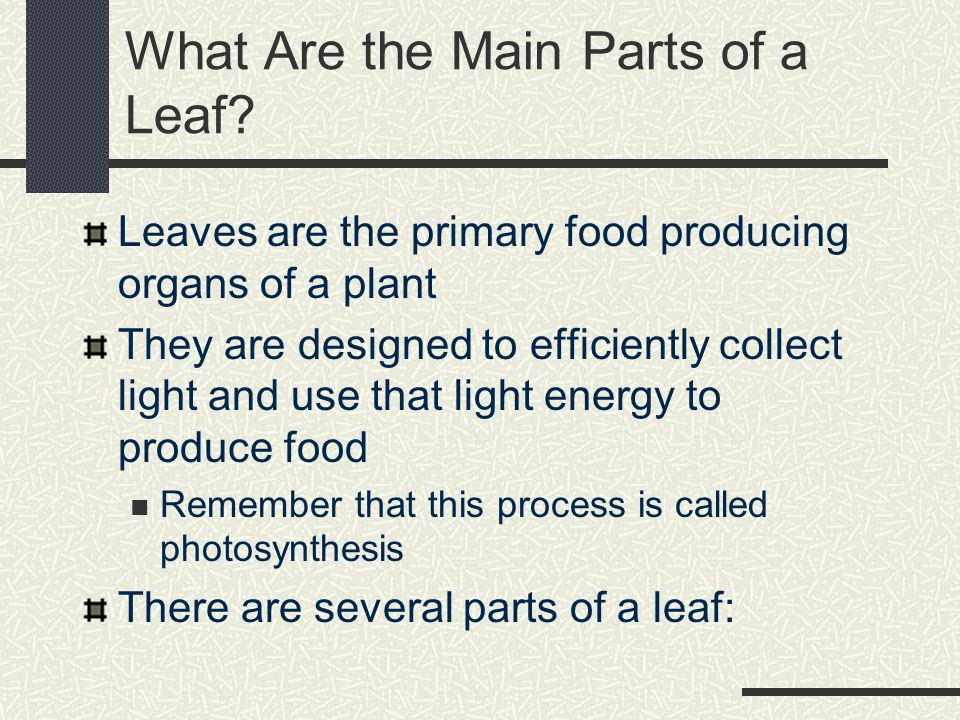 Student Objectives 1. Describe the main parts of a leaf 2.