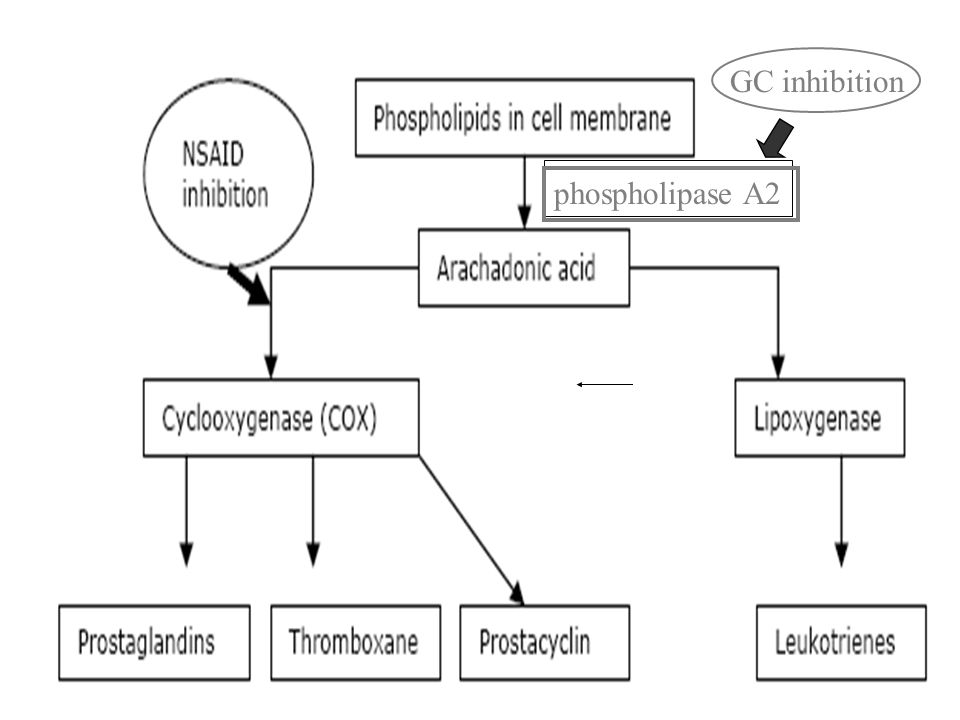 phospholipase A2 GC inhibition