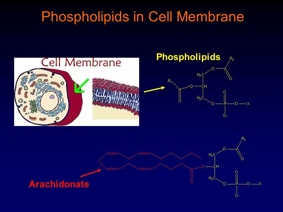 Phospholipids Arachidonate Phospholipids in Cell Membrane