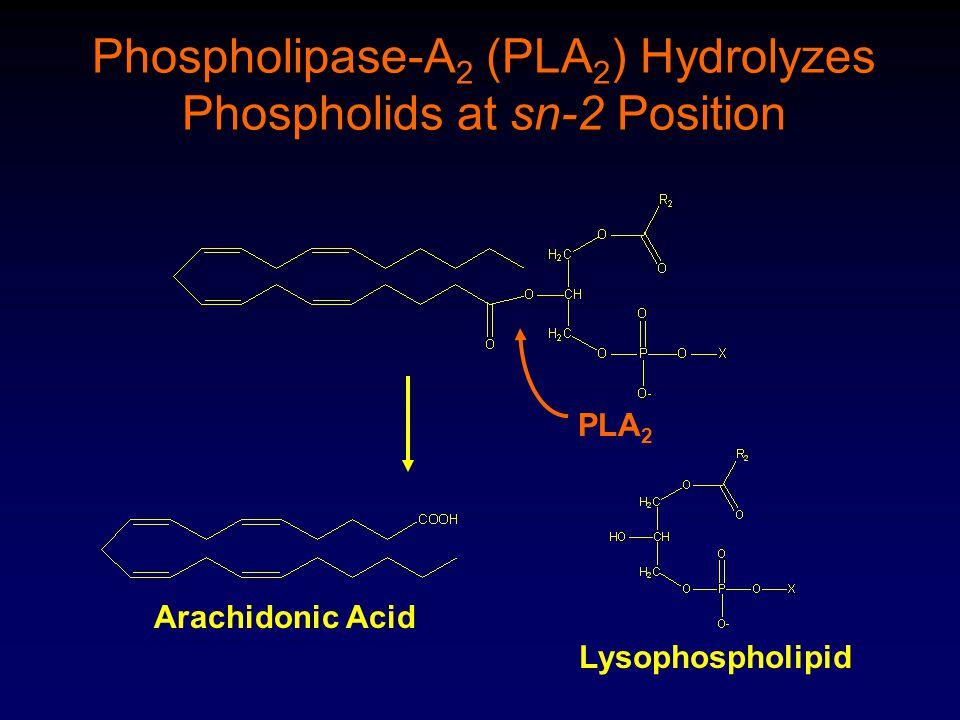 PLA 2 Phospholipase-A 2 (PLA 2 ) Hydrolyzes Phospholids at sn-2 Position Arachidonic Acid Lysophospholipid