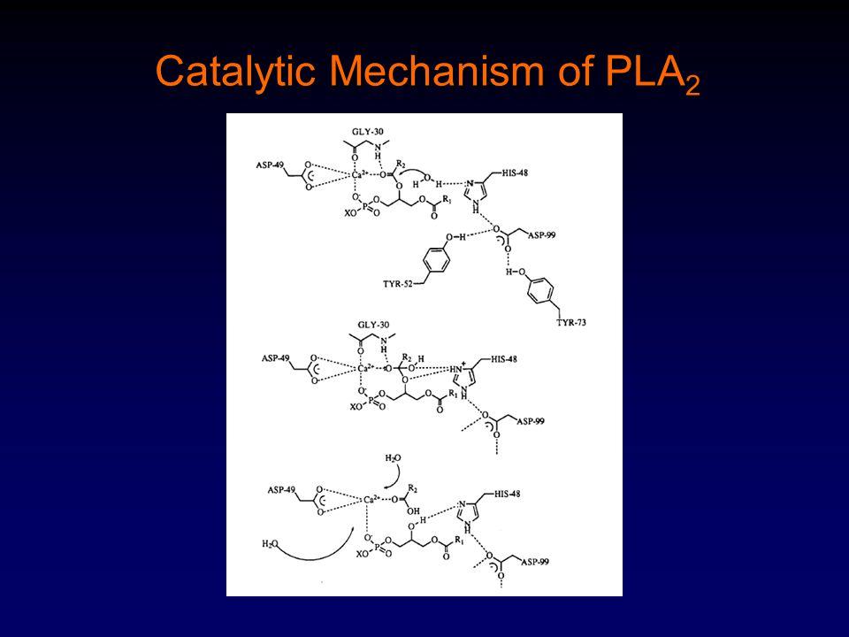 Catalytic Mechanism of PLA 2