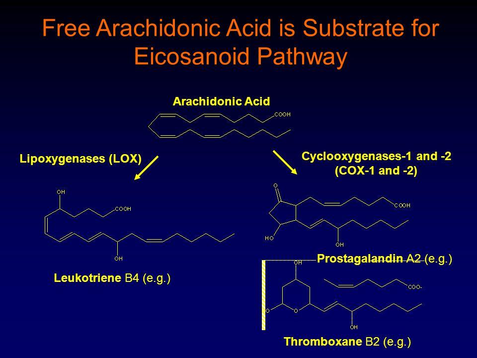 Arachidonic Acid Leukotriene B4 (e.g.) Prostagalandin A2 (e.g.) Thromboxane B2 (e.g.) Cyclooxygenases-1 and -2 (COX-1 and -2) Lipoxygenases (LOX) Free Arachidonic Acid is Substrate for Eicosanoid Pathway