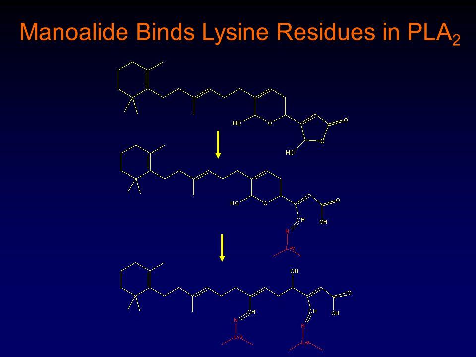 Manoalide Binds Lysine Residues in PLA 2