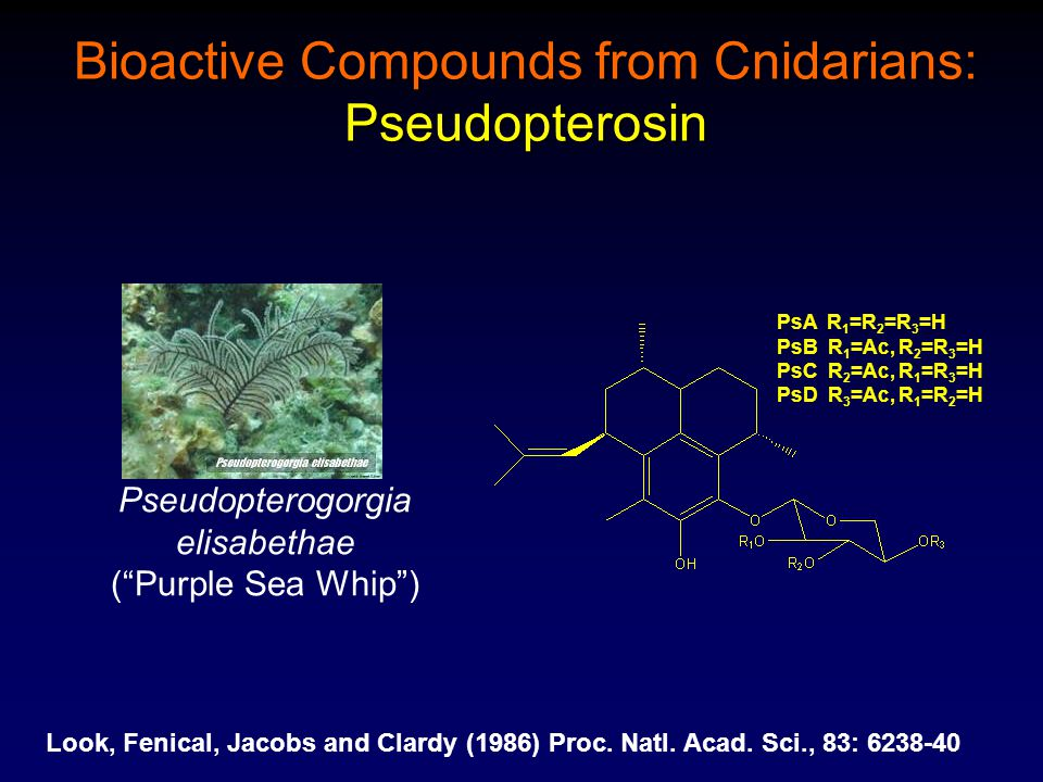 "Pseudopterogorgia elisabethae (""Purple Sea Whip"") Bioactive Compounds from Cnidarians: Pseudopterosin PsA R 1 =R 2 =R 3 =H PsB R 1 =Ac, R 2 =R 3 =H Ps"