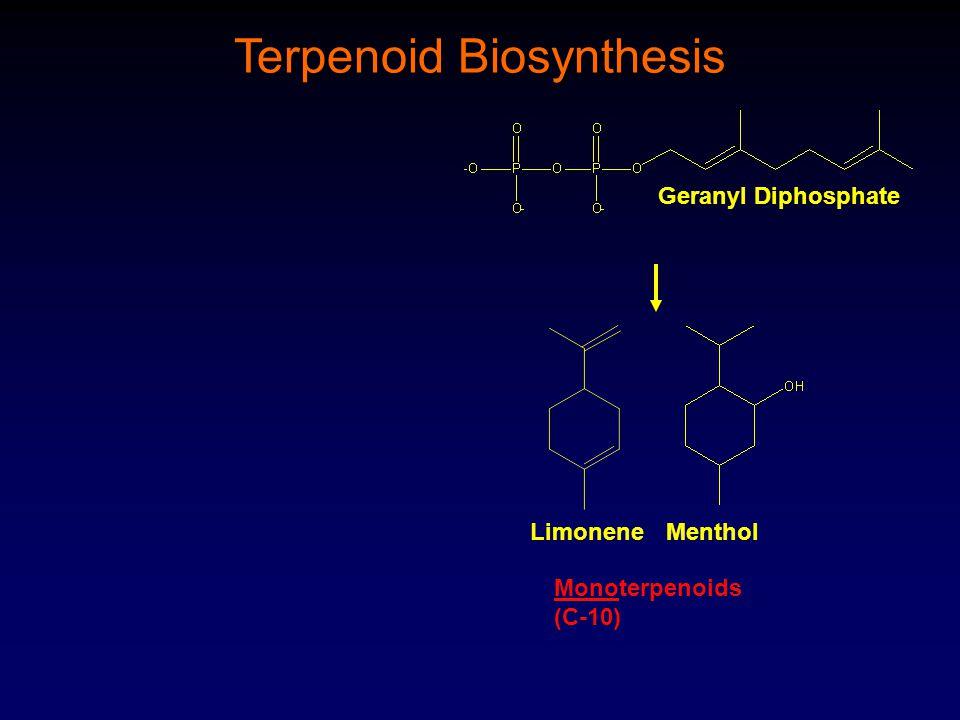 Geranyl Diphosphate Terpenoid Biosynthesis LimoneneMenthol Monoterpenoids (C-10)