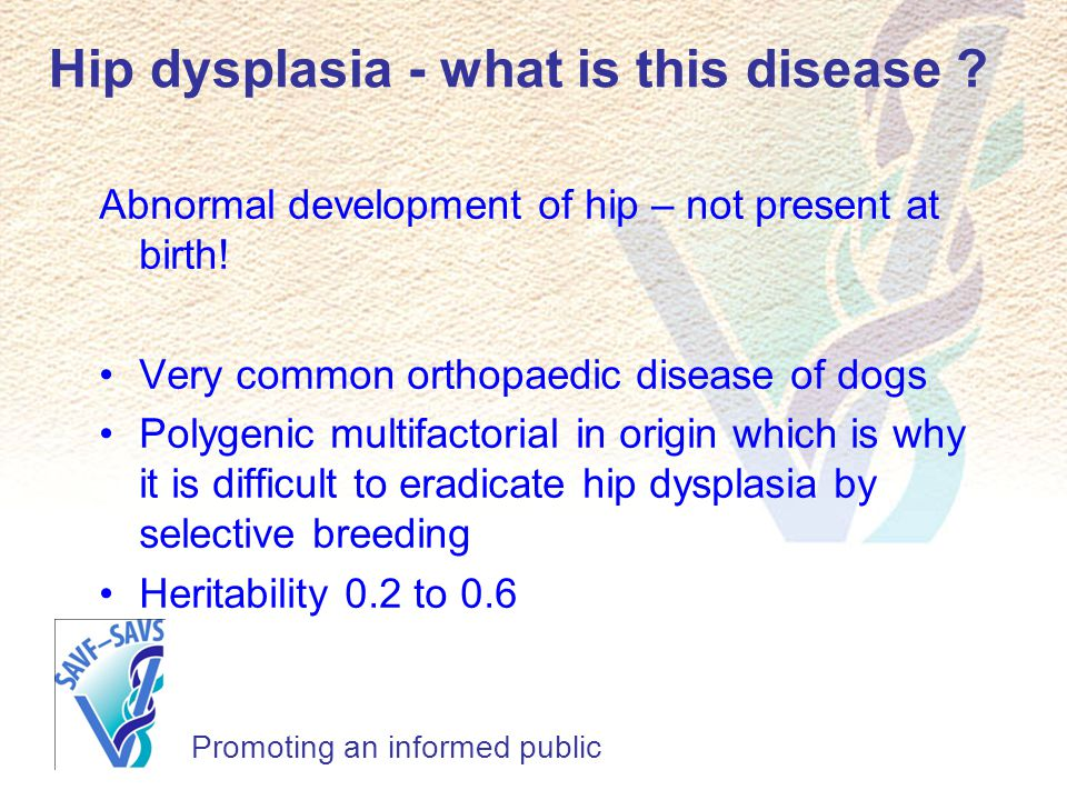 Hip dysplasia - what is this disease ? Promoting an informed public Abnormal development of hip – not present at birth! Very common orthopaedic diseas