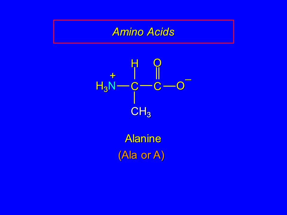 Amino Acids CC O O – CH 3 H H3NH3NH3NH3N + Alanine (Ala or A)