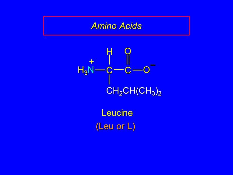 Amino Acids CC O O – CH 2 CH(CH 3 ) 2 H H3NH3NH3NH3N + Leucine (Leu or L)