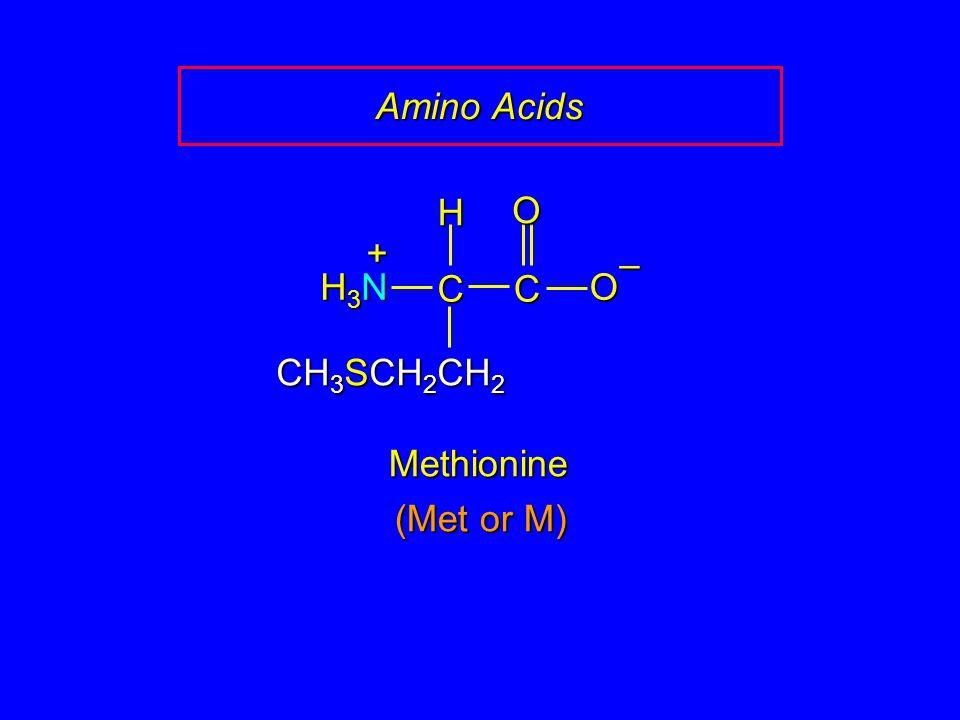 Amino Acids CC O O – CH 3 SCH 2 CH 2 H H3NH3NH3NH3N + Methionine (Met or M)