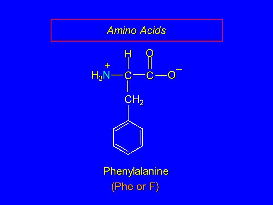 Amino Acids Phenylalanine CCOO – CH 2 H H3NH3NH3NH3N + (Phe or F)