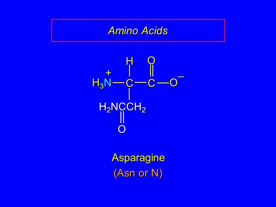 Amino Acids Asparagine CCOO – H H3NH3NH3NH3N + H 2 NCCH 2 O (Asn or N)