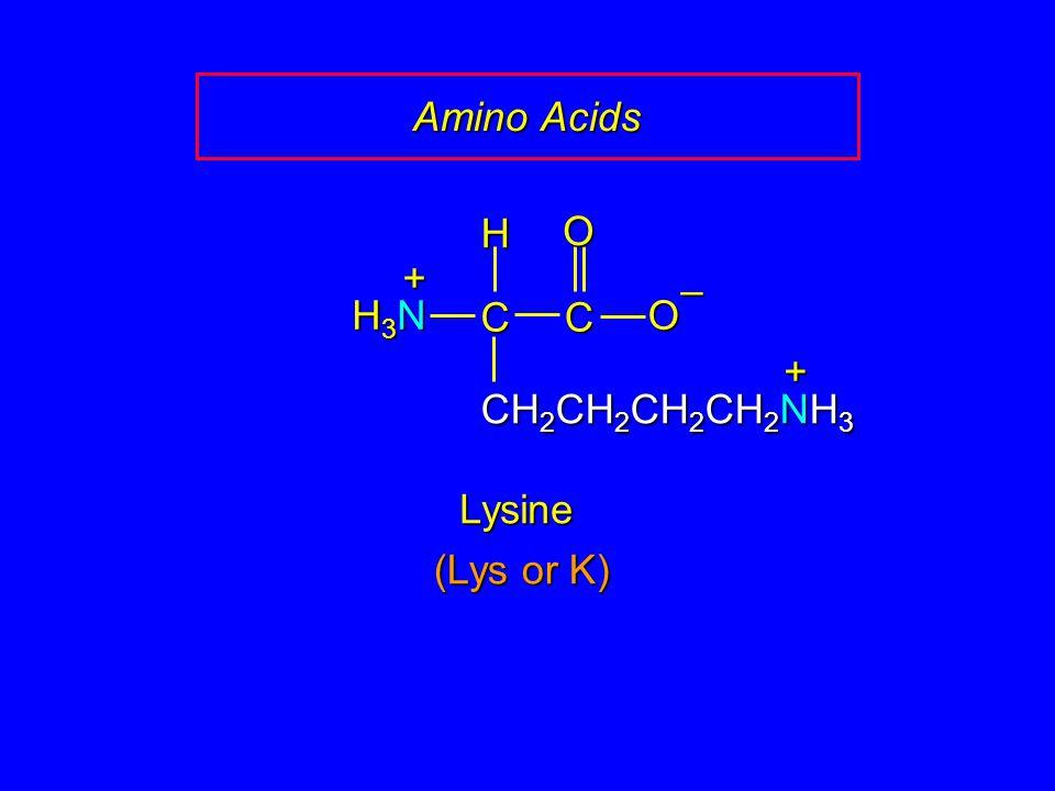 Amino Acids CC O O – CH 2 CH 2 CH 2 CH 2 NH 3 H H3NH3NH3NH3N + Lysine + (Lys or K)
