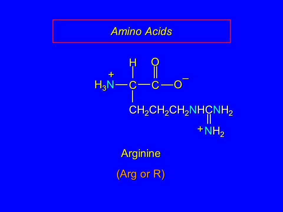 Amino Acids CC O O – CH 2 CH 2 CH 2 NHCNH 2 H H3NH3NH3NH3N + Arginine + NH2NH2NH2NH2 (Arg or R)