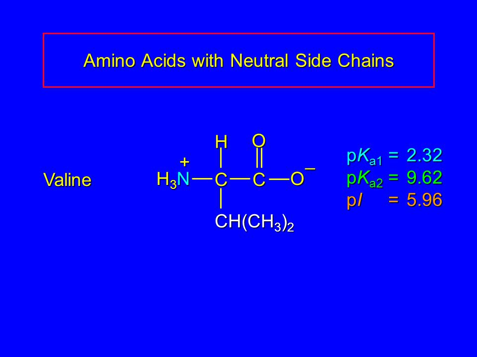 Amino Acids with Neutral Side Chains Valine pK a1 = 2.32 pK a2 =9.62 pI =5.96 H3NH3NH3NH3N CCOO – CH(CH 3 ) 2 H +